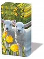fazzoletti Sweet Lambs