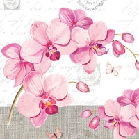Cocktail napkins Orchids With Love