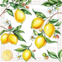 Cocktail napkins Citrus