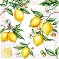 Cocktail Servietten Citrus