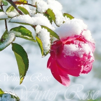 Lunch Servietten WINTER ROSE