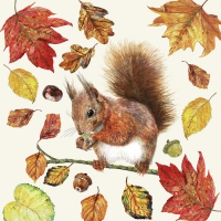 Lunch napkins Eating Squirrel