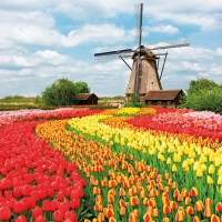 Lunch napkins Tulip Field