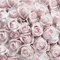 Lunch napkins Pastel Roses