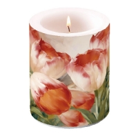 Candles Tulips Dream