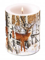 Bougies Deer In Forest