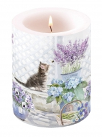 Candles Candle Big Kitten
