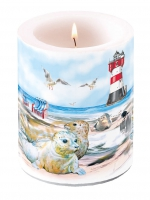 candele Candle Big Seals On The Beach