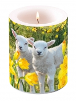 Candles Candle Big Sweet Lambs