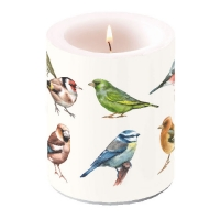 candele Candle Big Collection Of Birds
