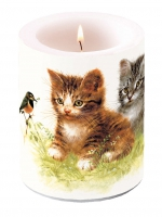 Candles Candle Big Kitten Friend