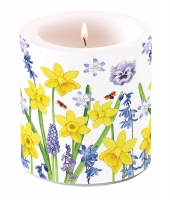 Candles Narcissus Love