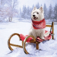 Servilletas 33x33 cm - Westie Outdoor