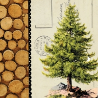 Serwetki 33x33 cm - Drzewo sosnowe