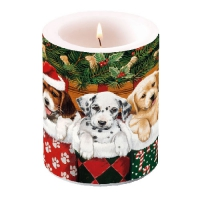 Candles Doggies