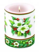candele Helleborus