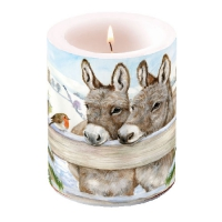 Candles Donkeys