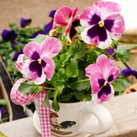 Serviettes lunch Pansy Cup
