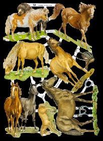Glanzbilder Pferde
