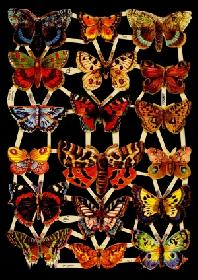 Glanzbilder 18 Schmetterlinge,Jugendtr.