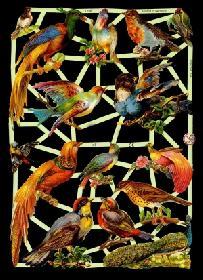 Glanzbilder exotische Vögel,Jugendtr.