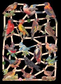 Glanzbilder Vögel