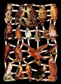 Glanzbilder Greifvögel