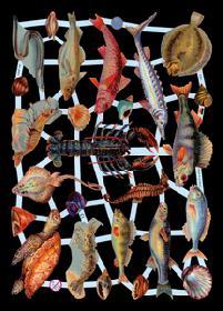 Glanzbilder Fische