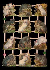 Glanzbilder Ratten /Mäuse