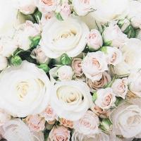 Cocktail Servietten Romantic Roses