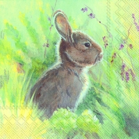 Cocktail napkins RABBIT IN THE MEADOW