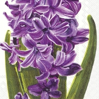 Serviettes cocktail  LILAC HYACINTH
