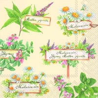 Lunch napkins IN THE HERB GARDEN cream