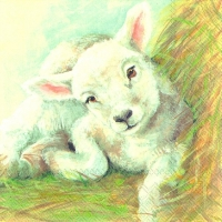 Lunch napkins YOUNG LAMB