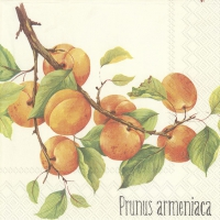 Lunch napkins PRUNUS ARMENIACA cream