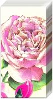 Taschentücher TEA ROSE white
