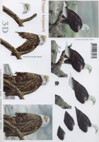3D Bogen Adler Format A4