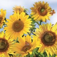 Lunch Servietten Sonnenblume
