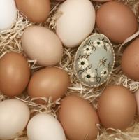 Lunch Servietten organic eggs