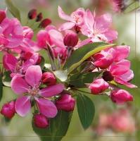 Lunch Servietten Flowering branch