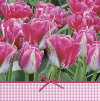 Lunch napkins Pink Tulips Time
