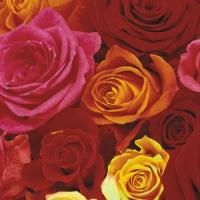 Lunch Servietten Ecuador Roses