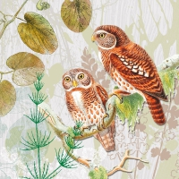 Lunch napkins Pair of Owls