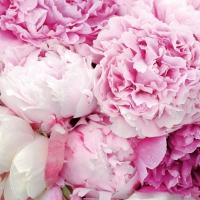 Tovaglioli 33x33 cm - Bellezza Rosa