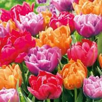 Tovaglioli 33x33 cm - Fiori di tulipano