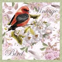 Napkins 33x33 cm - Vintage Bird