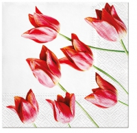 Napkins 33x33 cm - Red tulips