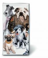 Taschentücher Dressed dogs