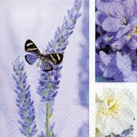 Cocktail napkins Dream of lavender