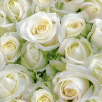 Cocktail Servietten White roses